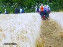 barleypath.jpg