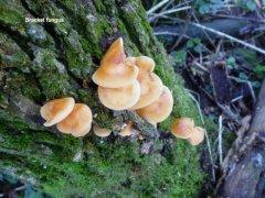 fungus.jpg