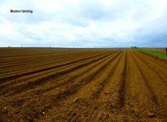 largefield.jpg