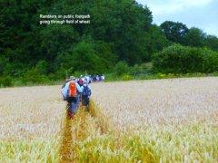 wheatpath.jpg